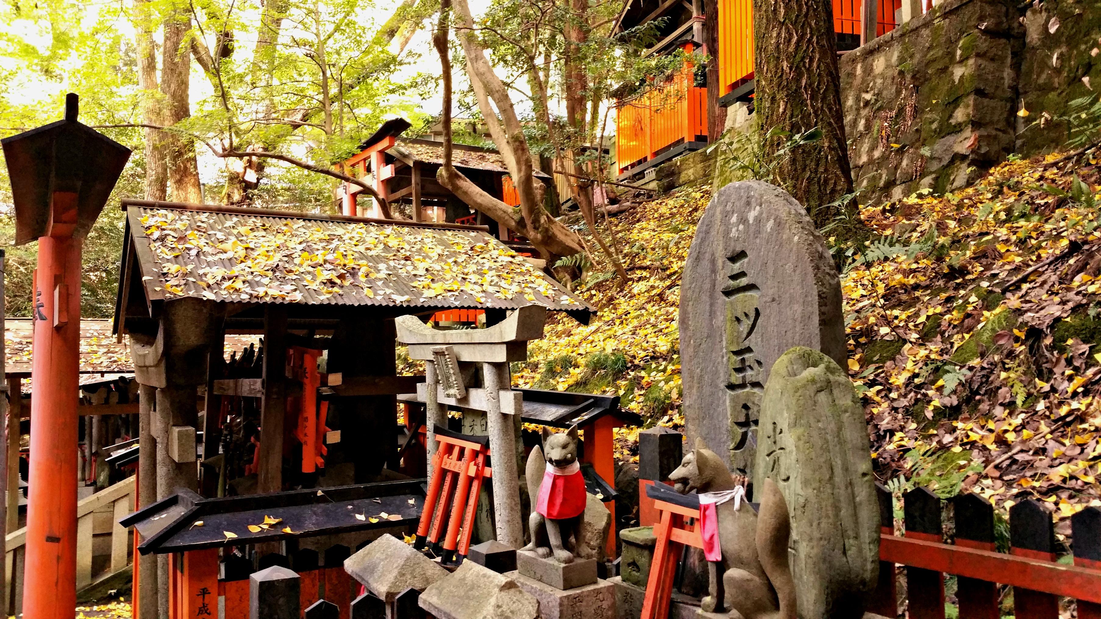 Fushimi Inari, Neko Café and Japanese grandmas