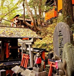Fushimi Inari, Neko Café & japanische Omis