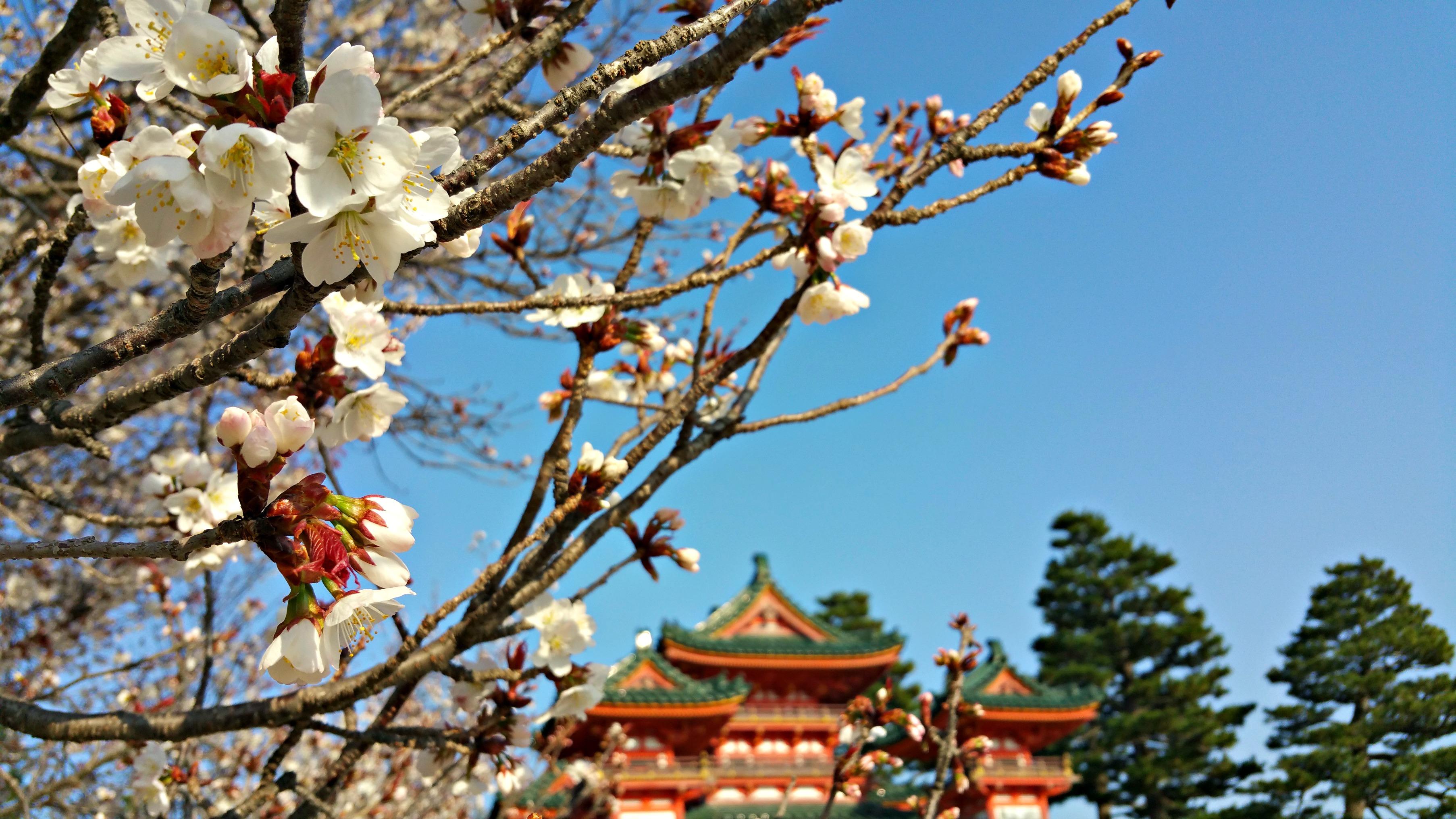 Liebesbrief an Japan